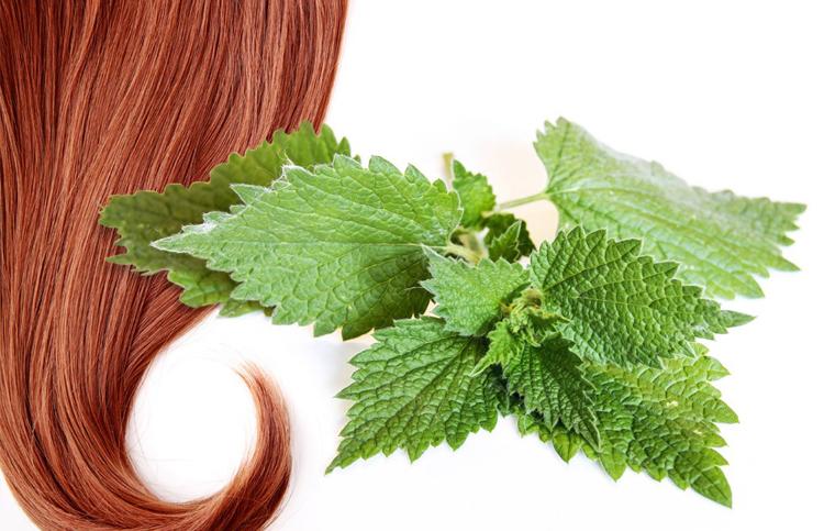 Лечение выпадения волос крапивой